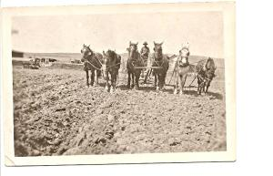 Farming with Horses 1900s